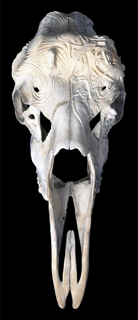 Duality - moose skull - 29x10x15in - 1997 - Shane Wilson