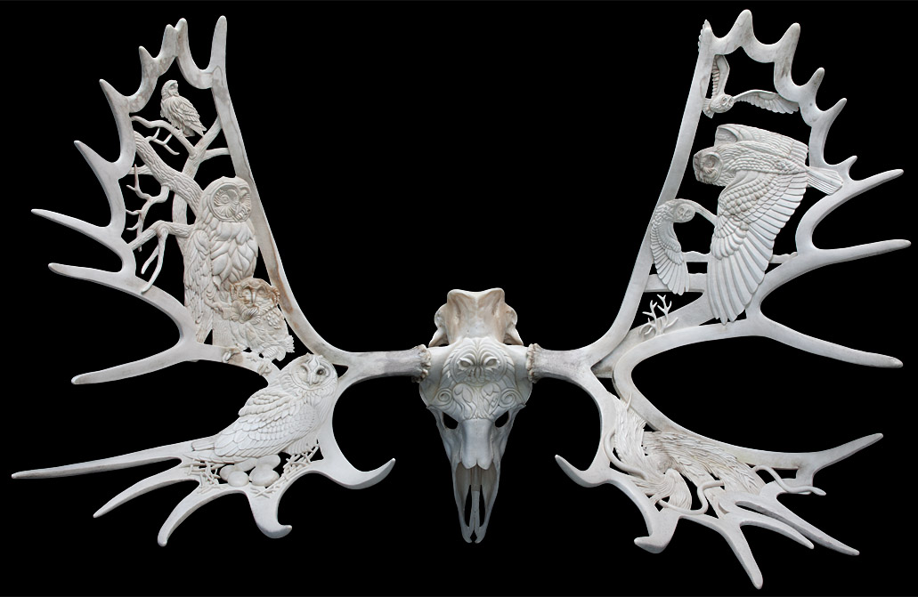 Short Eared Parliament - moose antlers and skull - 49x58x30in - 2013 - Shane Wilson